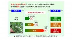 ★三喜有様 日本茶セミナー00021
