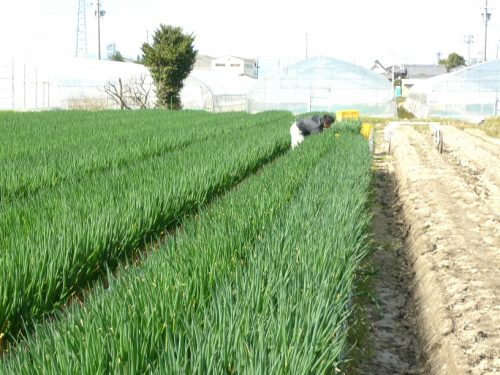 野井農園2